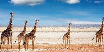 Luxe rondreis Sterren stralen boven Namibië