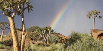 Green Kalahari