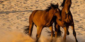 Kampeersafari Ontdek Namibië