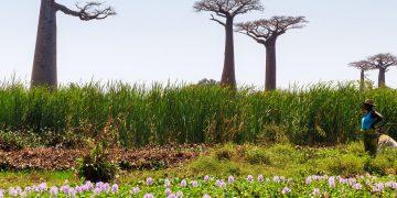 Reis naar de hoogtepunten van West Madagascar