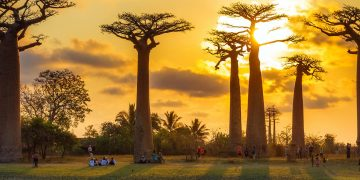 Autoreis  Midden en Zuid Madagascar