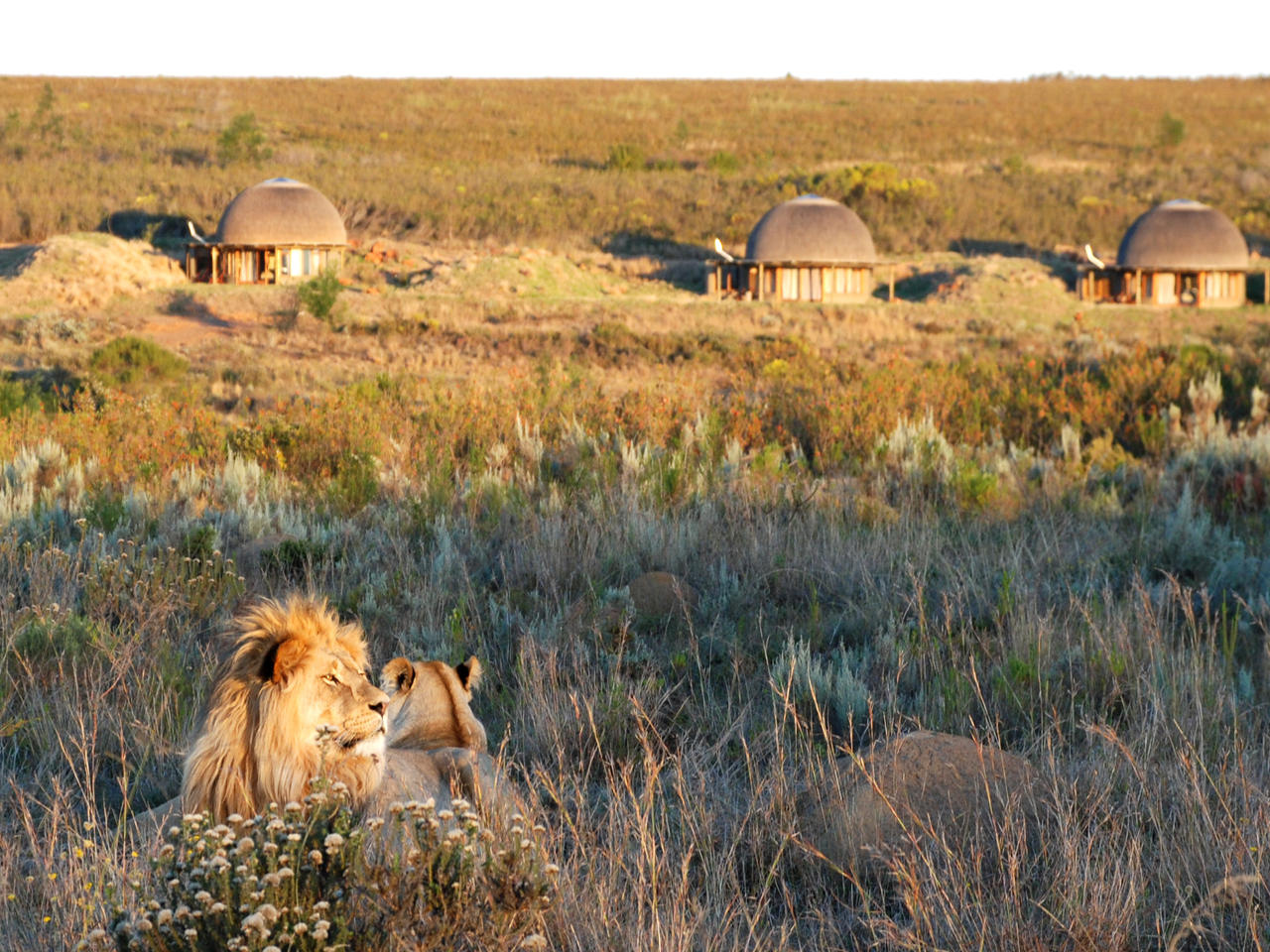 Big Five in Gondwana Game Reserve