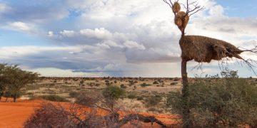 Kalahari South