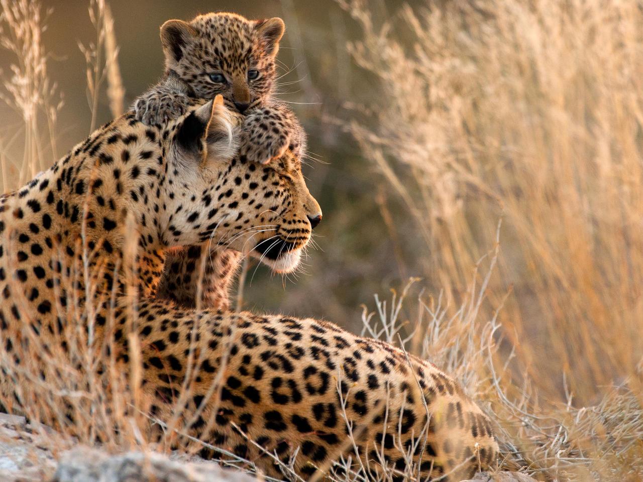 Kgalagadi Transfrontier park Zuid-Afrika