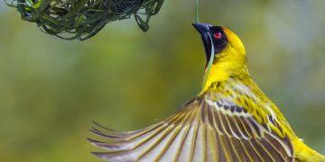 Kokomori Nature Reserve