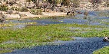 Boteti River – Makgadikgadi Pans National Park