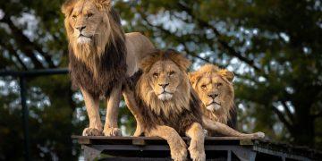Kampeersafari Op avontuur door Namibië en Botswana
