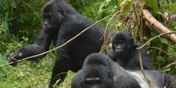 Onvergetelijk Oeganda – rondreis met gids