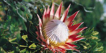Hoogtepunten Zuid-Afrika reis met binnenlandse vlucht