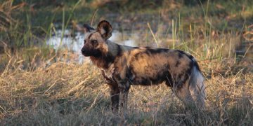 Botswana by Natural Selection