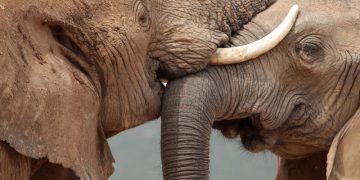 Kaapstad via Tuinroute naar Addo Elephant Park