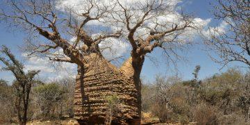 Tsimanampetsotsa National Reserve